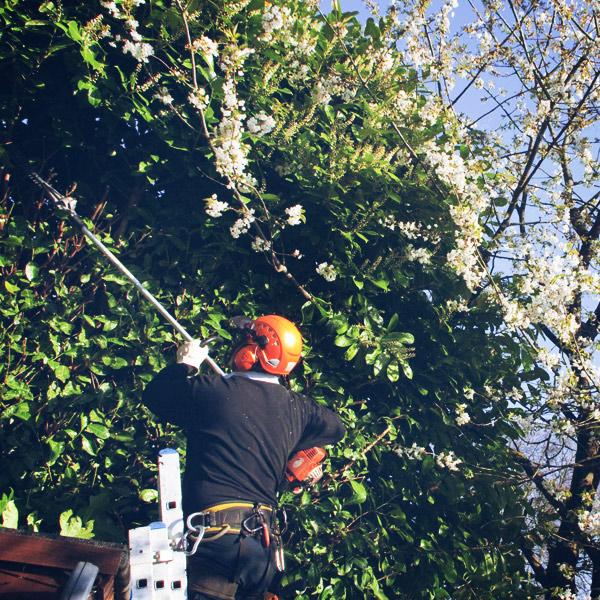 arboricultura-viver-del-rec