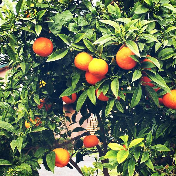 fruiters-viver-del-rec-